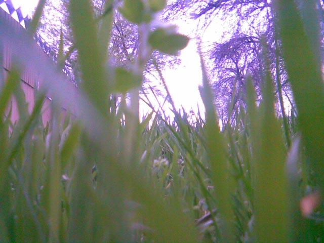 Трава крупным планом