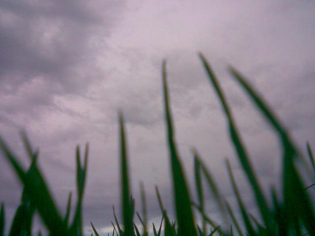 Вид на небо сквозь траву