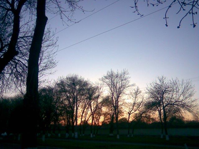 Яркое солнце между деревьями