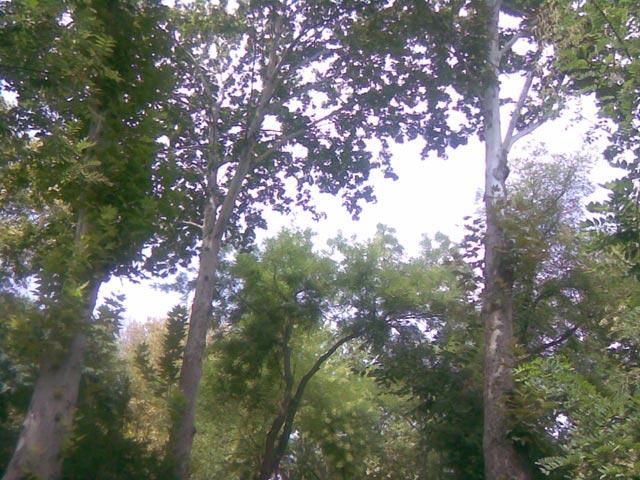 небо сквозь деревья