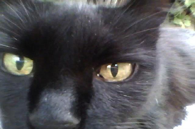 Моя черная кошка
