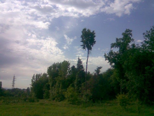 небо и темные деревья