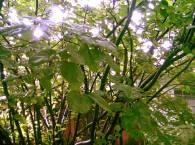 Дерево после дождя