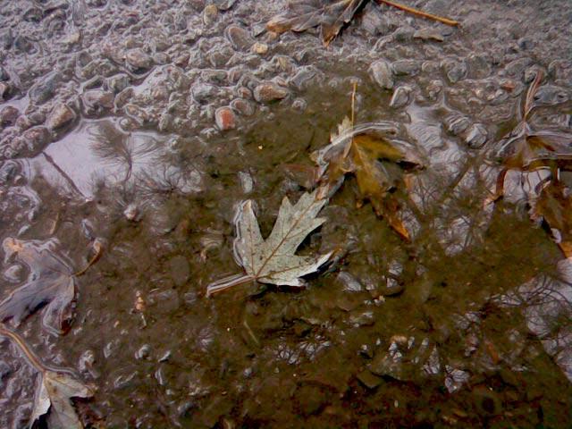 кленовый лист в воде