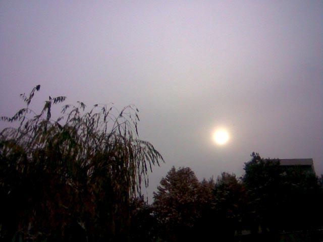солнце над деревьями