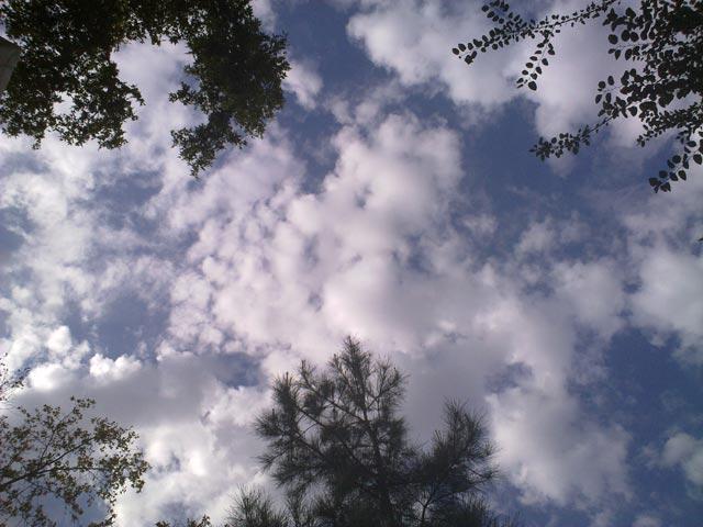 Небо и ель