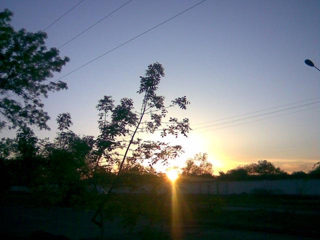 Луч солнца сквозь дерево