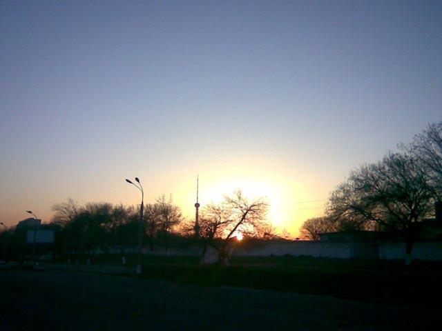 Деревья и солнце