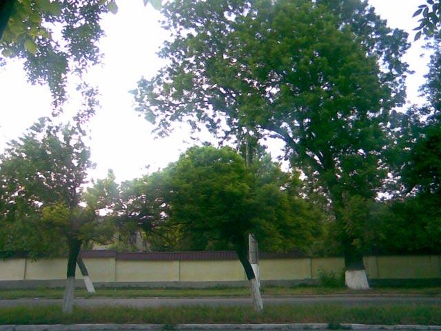 Яркое зеленое дерево