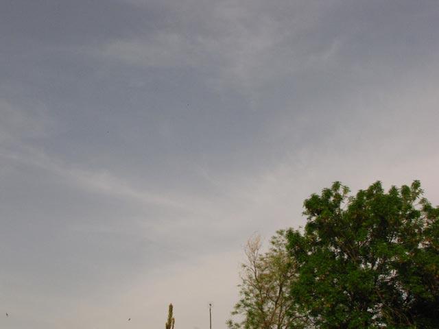 Зеленые дереаья
