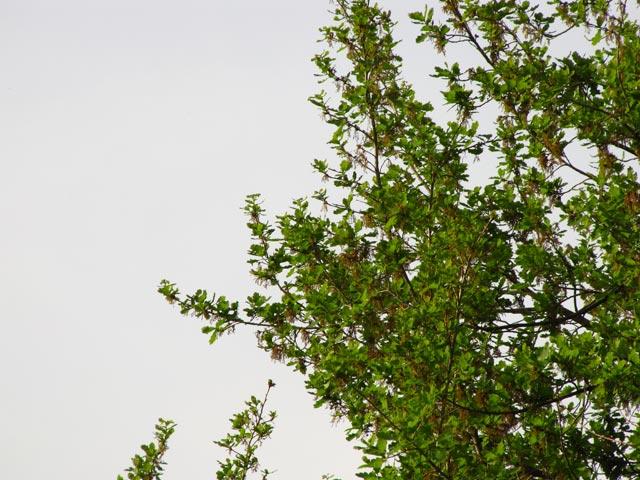 Яркое фото деревьев