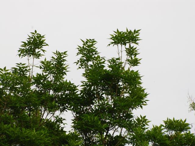 Фото дерева крупны планом с расстояния 20 метров
