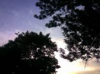 Яркое солнце и темные деревья