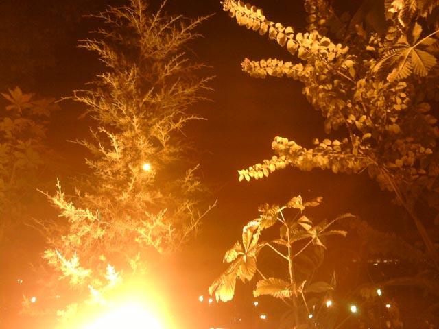огненные деревья