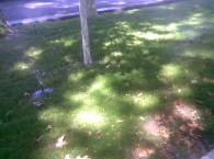 Игра света на траве
