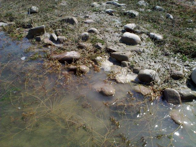 Камни в тине