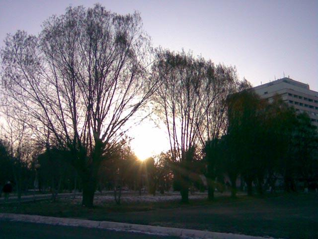 Солнце сквозь дерево