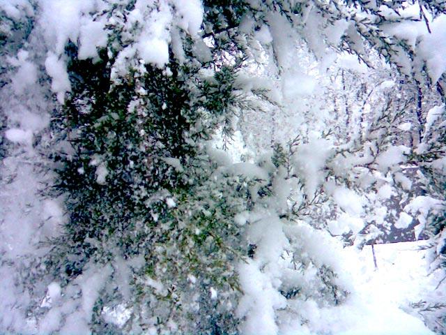 Осыпается снег с ели