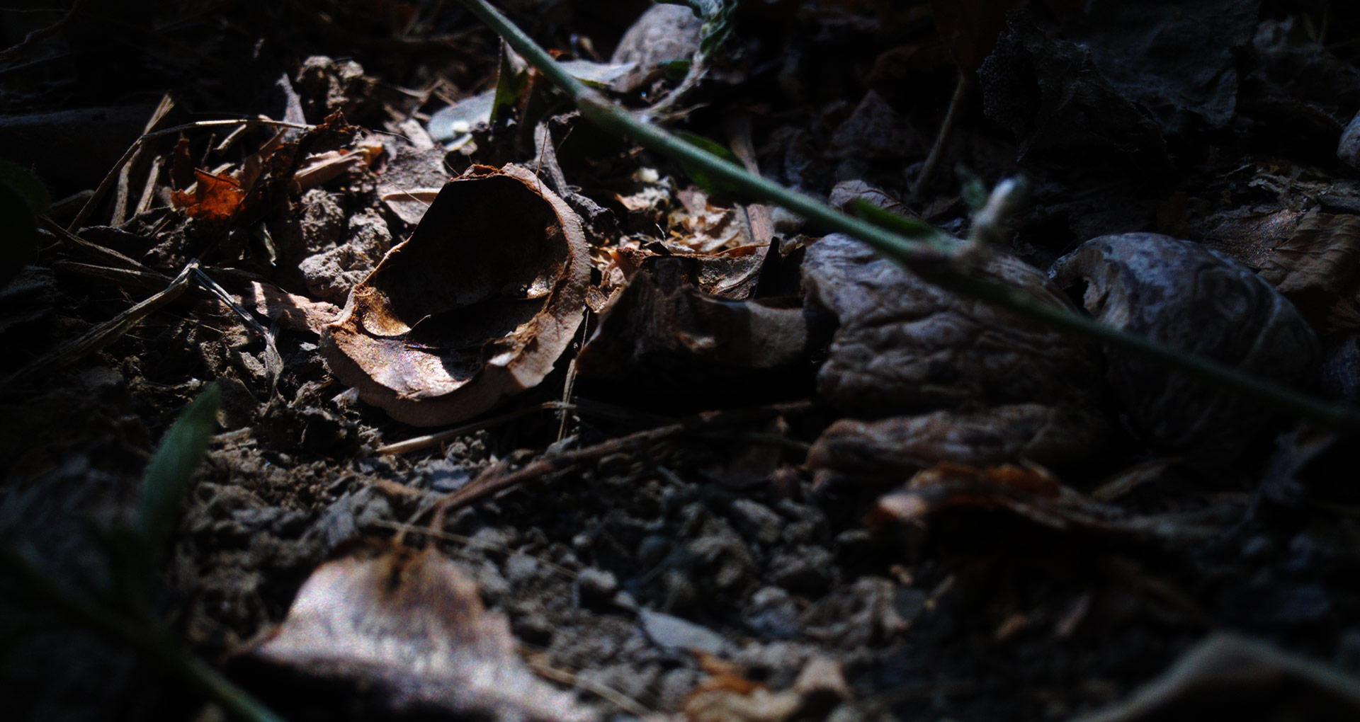 Макро мир - скорлупка от ореха
