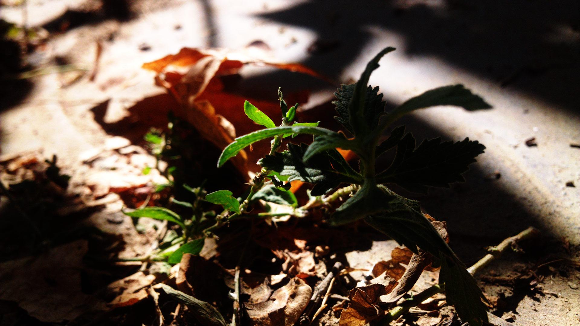Макро мир - растение и муравьи