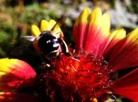 Макро мир - пчела