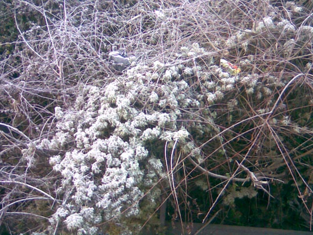 Растения возле канала