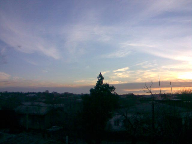 Ель на фоне восходящего солнца