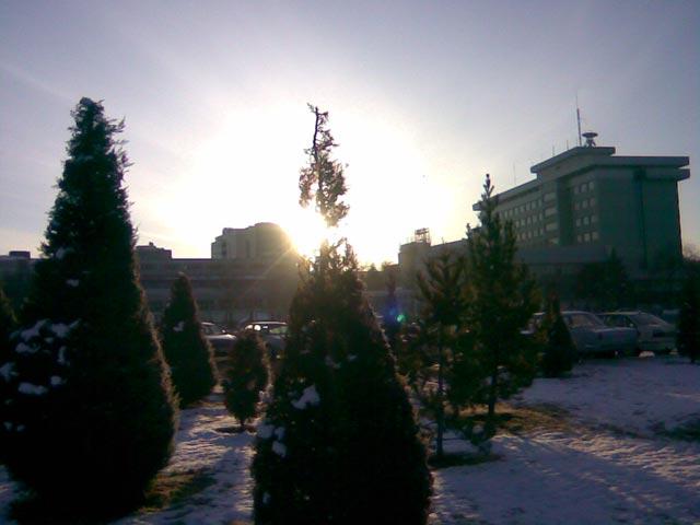 Утреннее солнце над елью