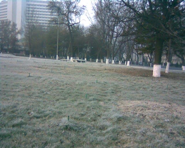 Газон в парке