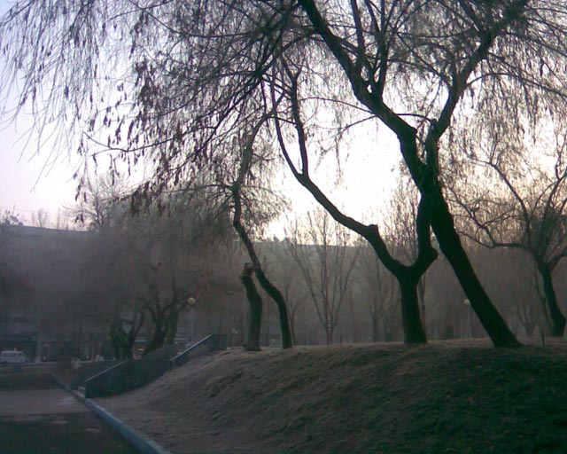 Утро и дерево