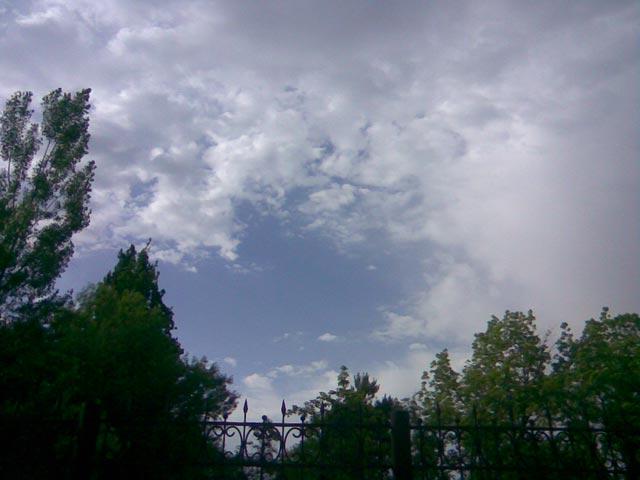 Небо и деревья