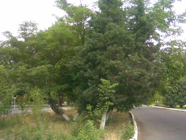Дерево и аллея