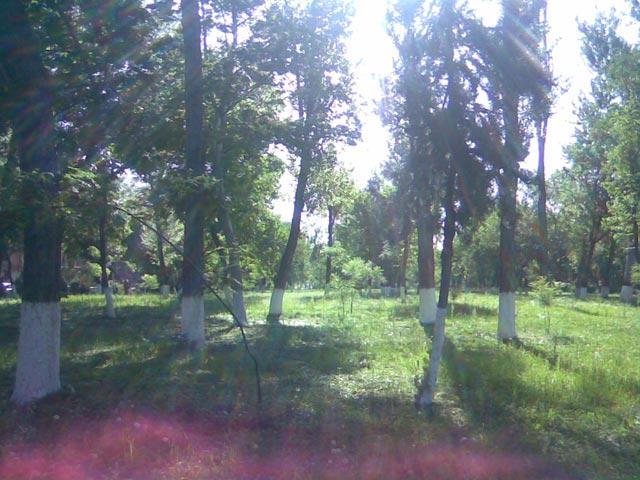 Лучи солнца сквозь деревья