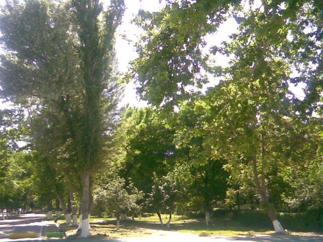 аллея и деревья
