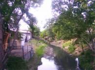 Канал и деревья