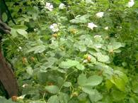 Яркая зеленая растительность