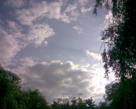 Солнце из-за дерева