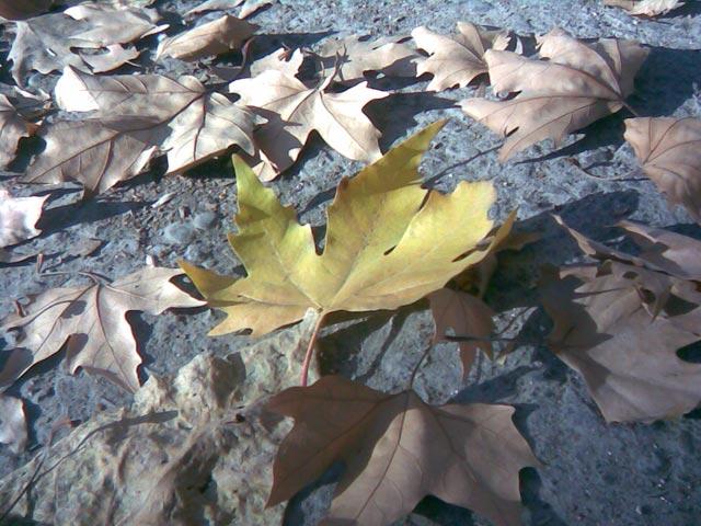 Одинокий желтый лист крупным планом