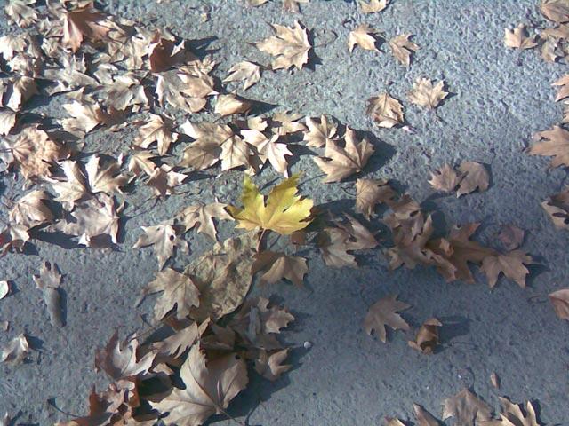 Одинокий желтый лист