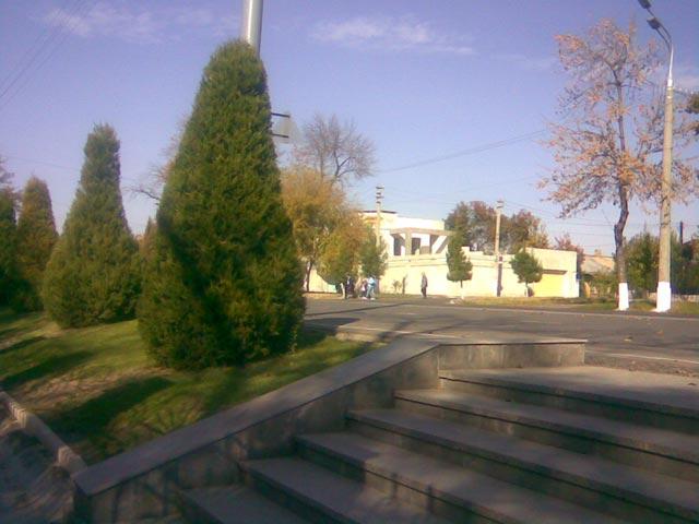 Обычная дорога и елки