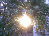 Солнце через пух