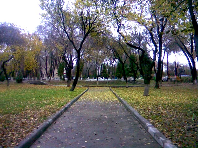 усыпанная листьями дорога