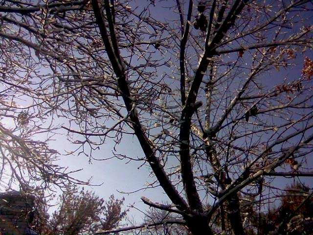 Дерево в листве