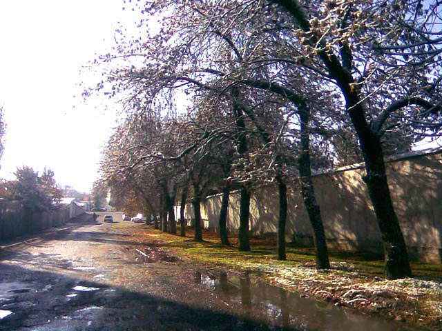 Деревья и яркая трава