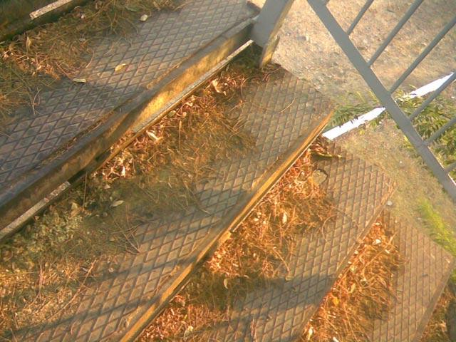 Листья на лестнице