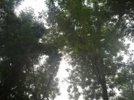 вид из окна университета
