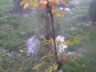 Небольшое деревце в воде