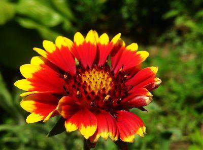 Фотография цветка ярким солнечным днем
