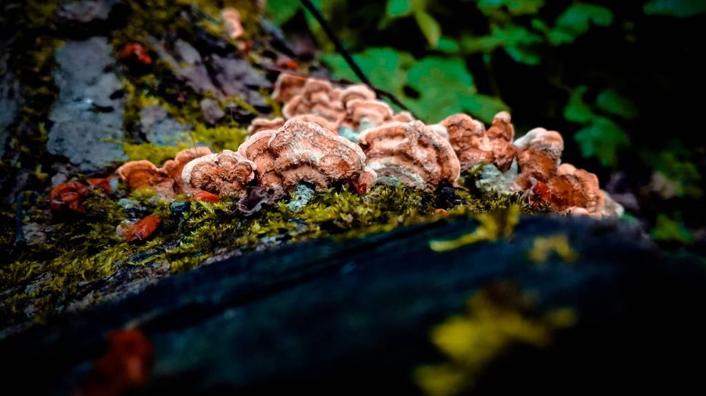 Колония грибов на дереве макрофото