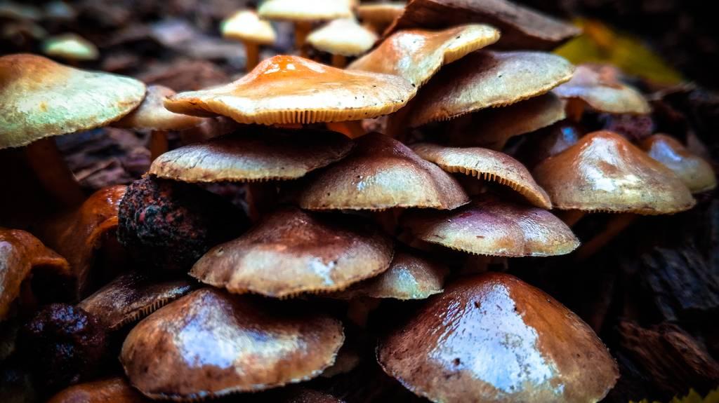 Колония грибов на пеньке